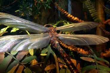 Gigantiska insekter som en gång dominerade vår planet