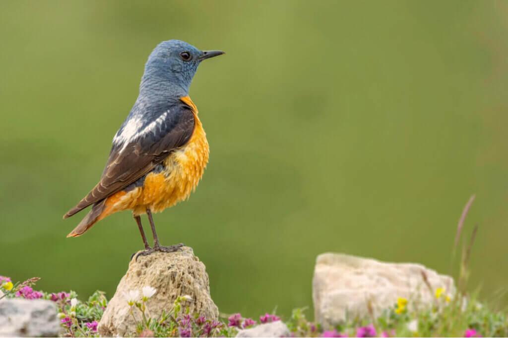 Den fantastiska faunan i Guadarrama nationalpark