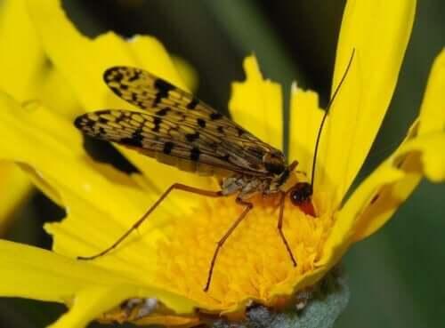 Pollinering mellan insekter och växter: En insekt på en gul blomma.