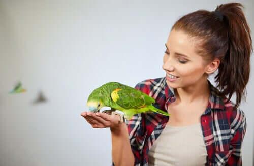 Kognitiva förmågor hos papegojor: intelligenta fåglar