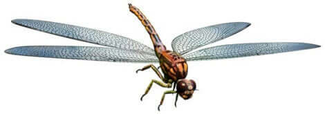 En av de gigantiska insekter som bebodde jorden.