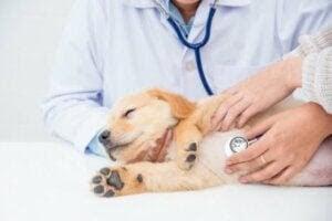 One Health Framework: valp får veterinärvård