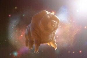 björndjur i rymden
