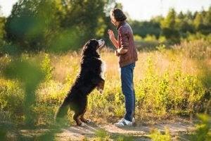 Människan och hunden: kvinna tränar hund