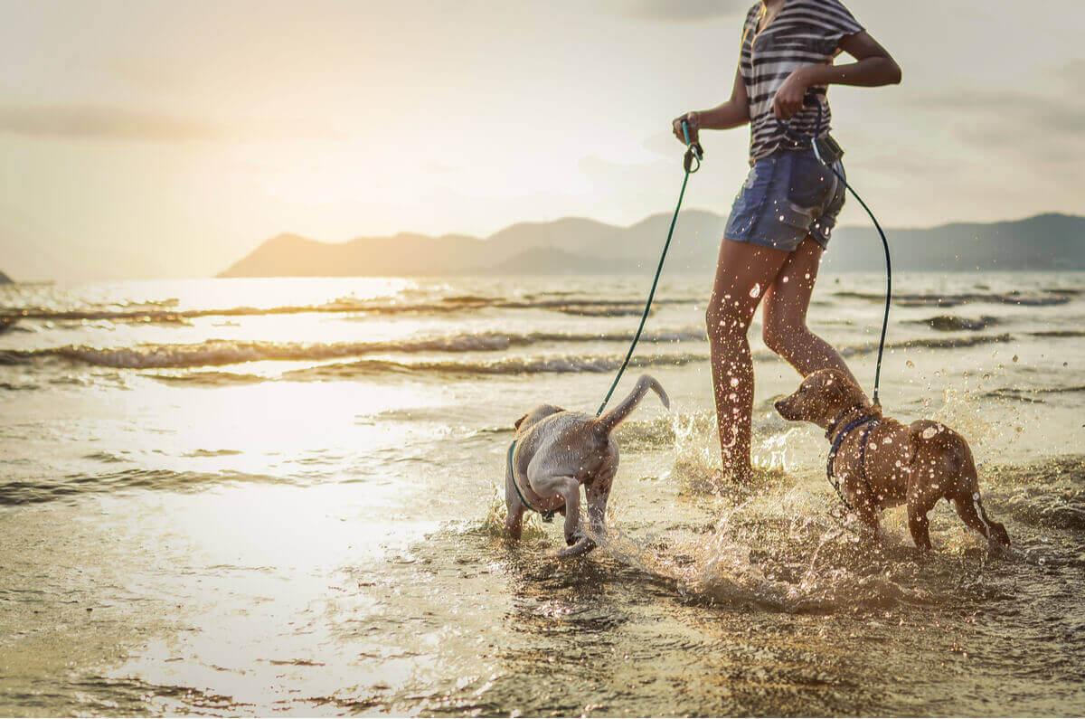 Ägare är ute och springer med sina hundar i vattenkanten.