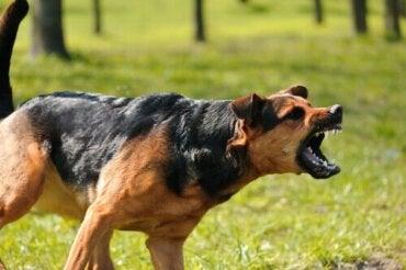 Juridiska följder av en livshotande hundattack