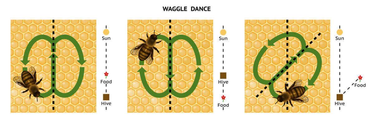 En illustration av hur bidansen genomförs.