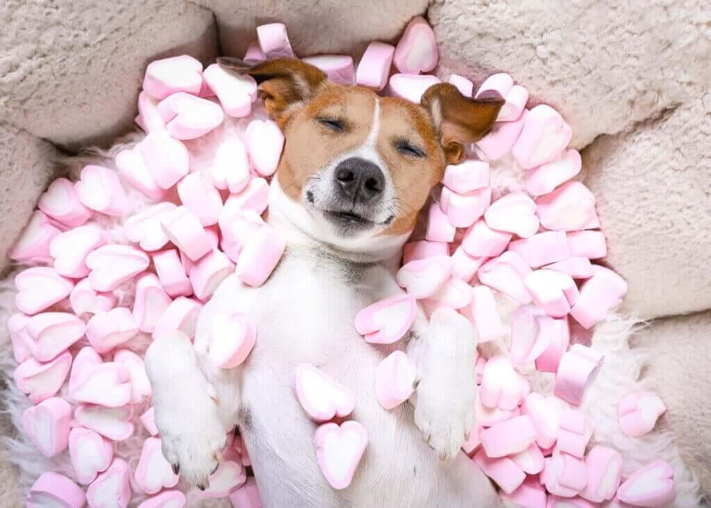 Är det farligt för hundar att äta sötsaker och godis?