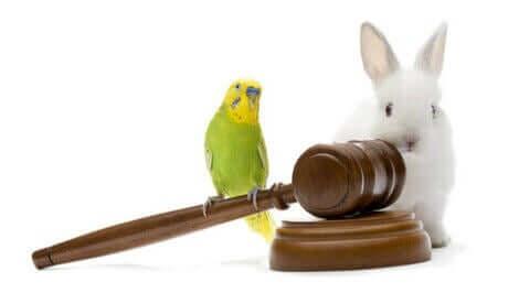 En kanin och en undulat behöver en djurrättsadvokat.