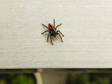 Så kan du övervinna din spindelfobi