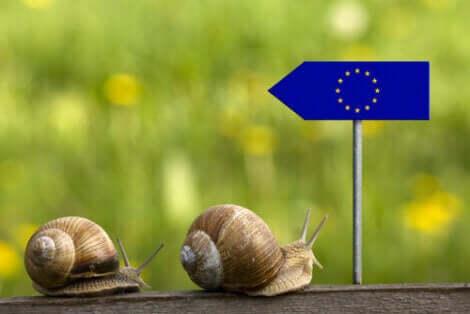 Vad är en djurrättsadvokat: två sniglar på väg mot en EU-flagga.