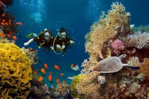 korallrev och mikroskopiska alger: dykare och havssköldpadda