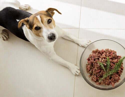 Är hundar naturliga köttätare eller allätare?