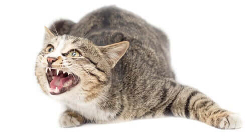 Är det sant att katter kan lida av ångest?
