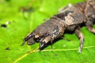Insekter som ser läskiga ut, men som är ofarliga
