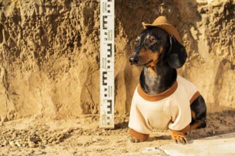 Hundens roll: En hund klädd i arkeologkläder.