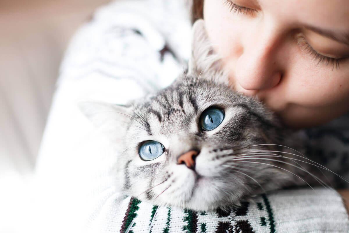 En ägare ger sin katt en puss på huvudet.