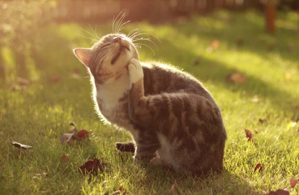 Atopi hos husdjur: en överdriven immunrespons