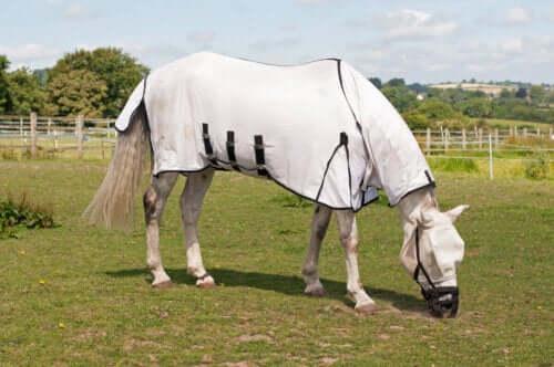 Häst med täcke på.