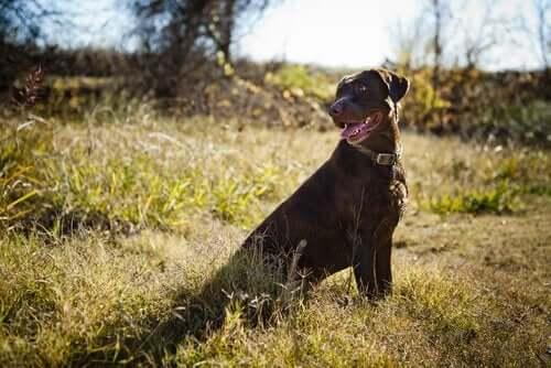 Inkallning: Få hunden att komma när du ropar