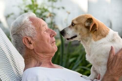 Hund tittar sin ägare i ögonen.