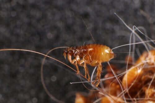 Varför det är viktigt att undvika parasiter hos husdjur