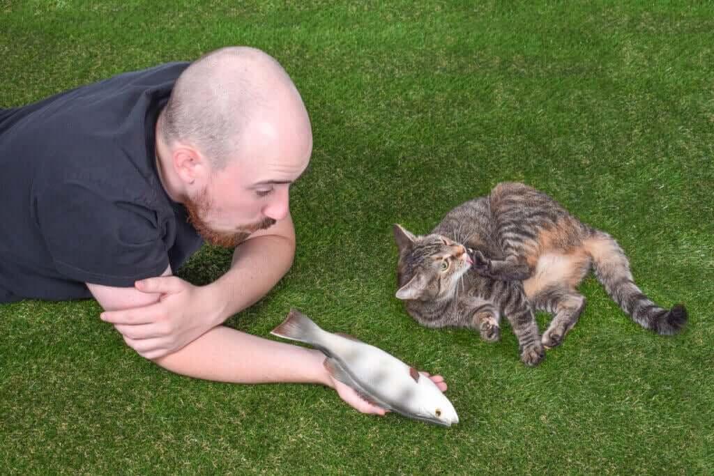 Interaktioner mellan människa och katt: 4 intressanta fakta
