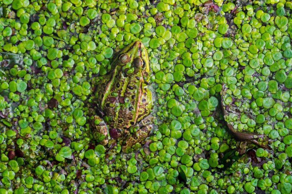 Förlusten av våtmarker: anledningar och konsekvenser