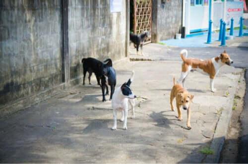 Sökandet efter de bortsprungna hundarna efter explosionen i Beirut