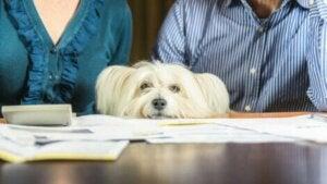 Hund känner av sin ägares stress