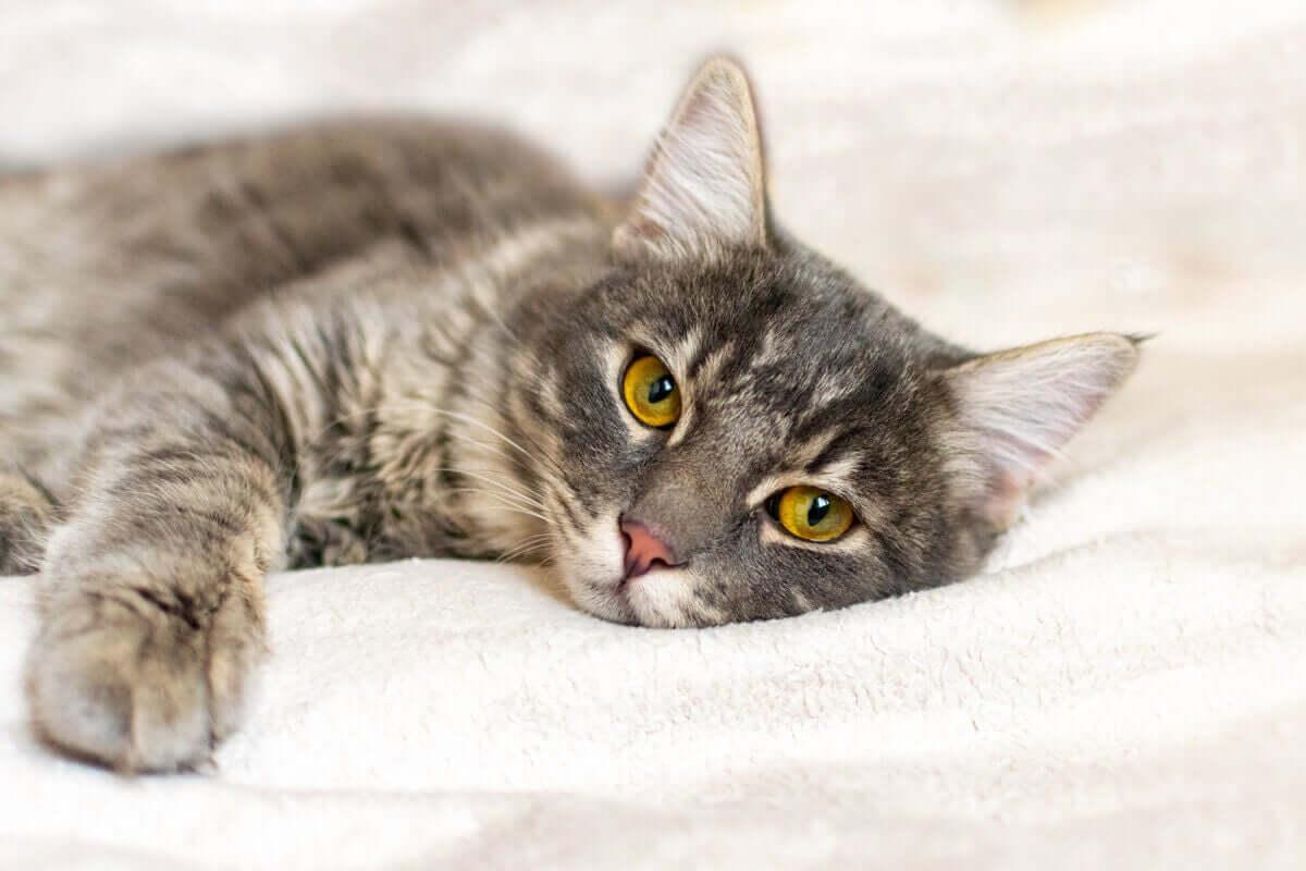 Katt ligger på en säng.