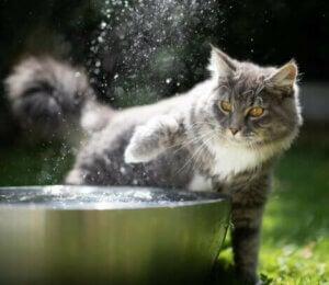 Katt vid vattenfontän