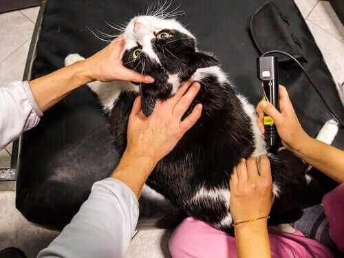 Allt om användningen av laserbehandling på djur