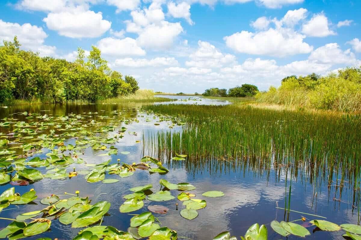 Våtmarker består till stor del av vatten.
