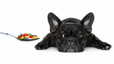 Alla vitaminer din hund behöver