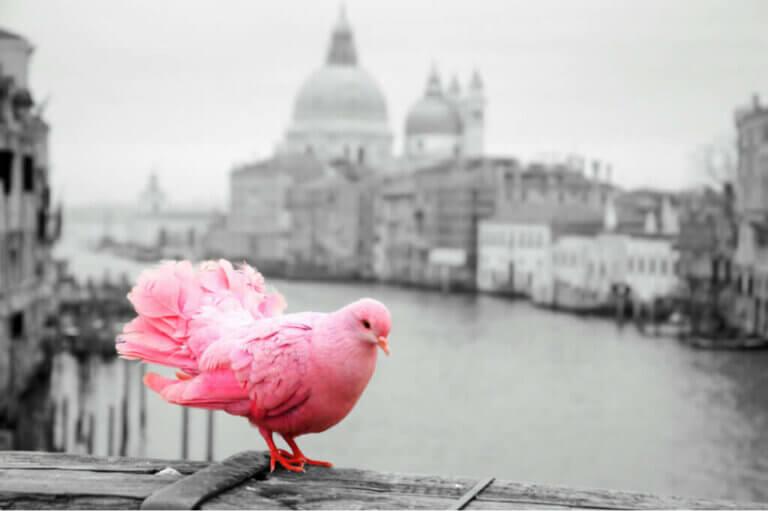 Buller stör fåglar: Ett av deras största hot