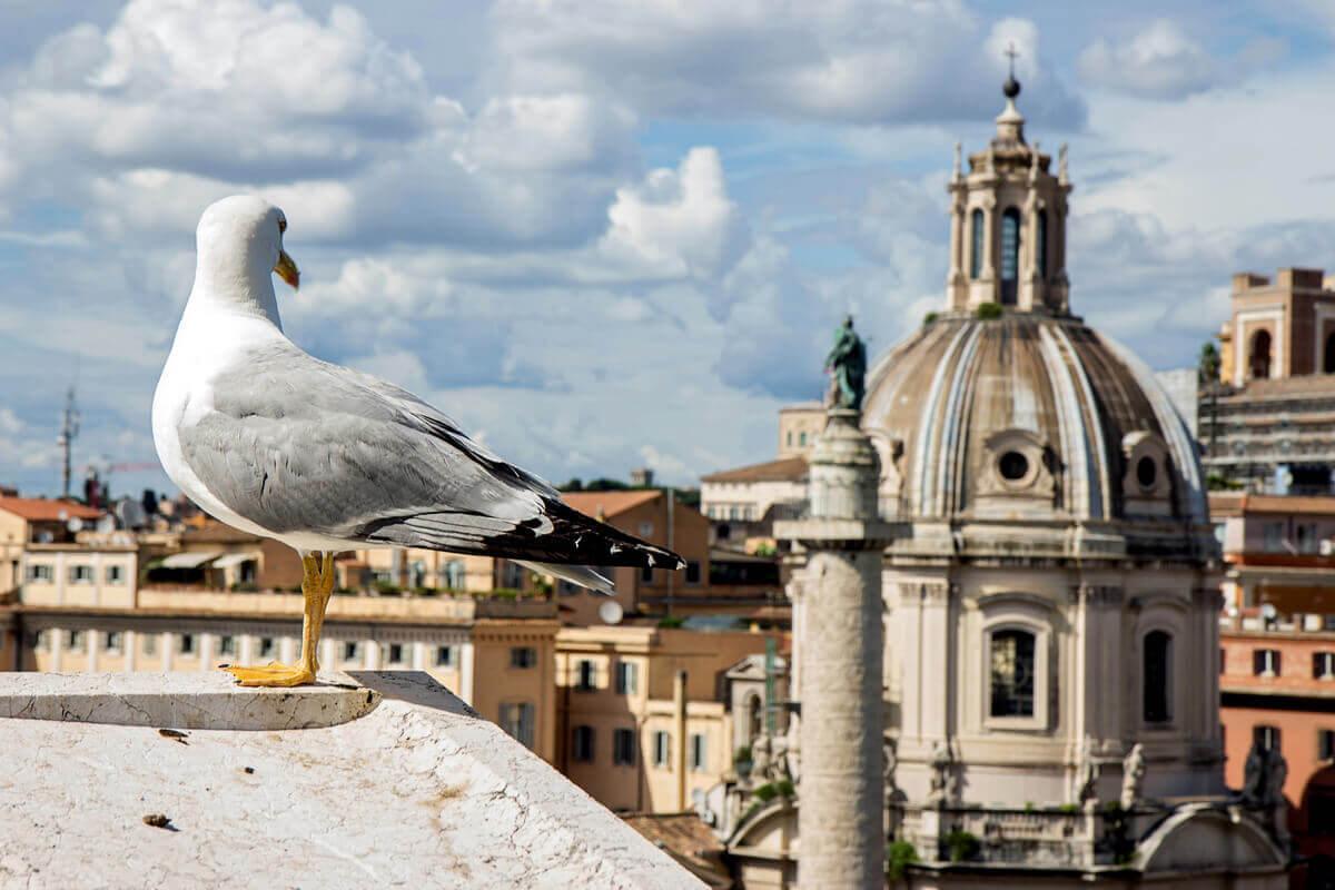 Fiskmås sitter på ett tak i en stad.