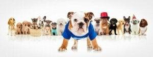 Ett flertal hundar med kläder