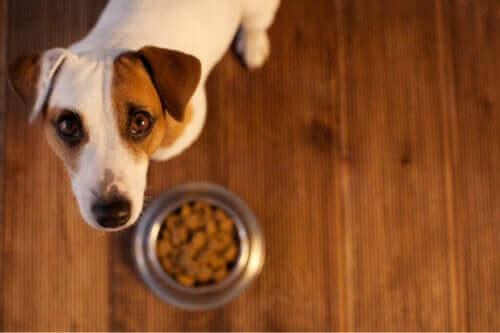 Så vet du om ditt husdjur har en födoämnesallergi