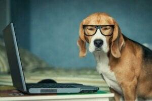 Hur vi ser djur: Hund med glasögon