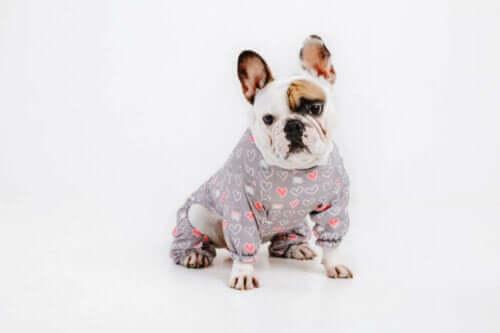 Är hundar bekväma med kläder?