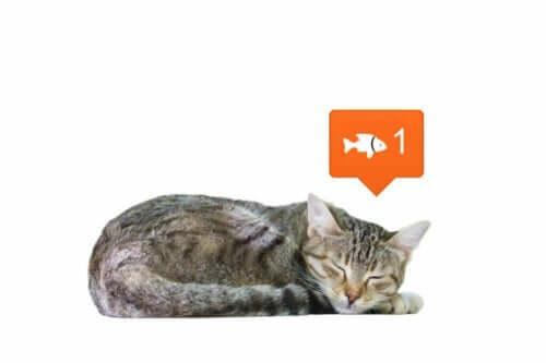 Sociala nätverk ändrar hur vi ser djur