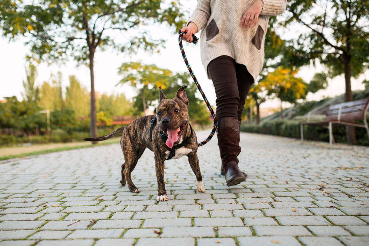Kvinna på promenad med sin hund.