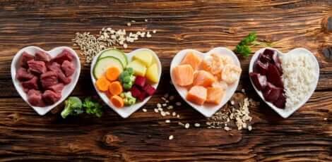 Födoämnesallergi hos husdjur: Mat i hjärtformade skålar.