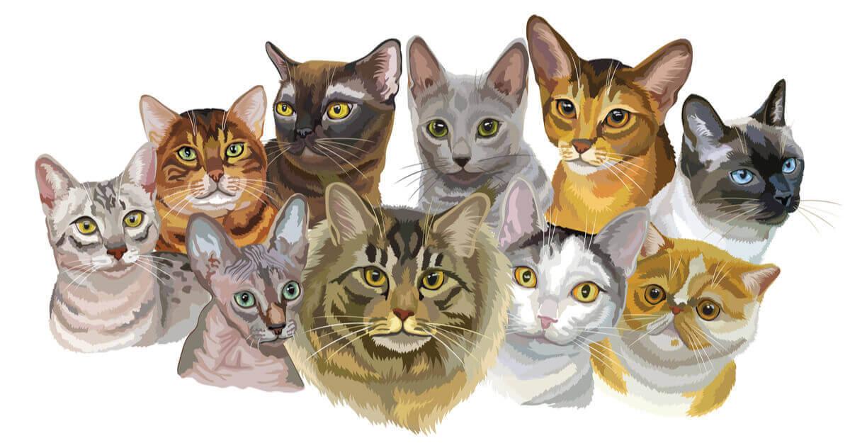 Målat porträtt på katter.