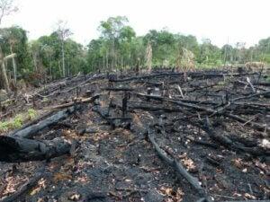 Skog efter skogsbränder