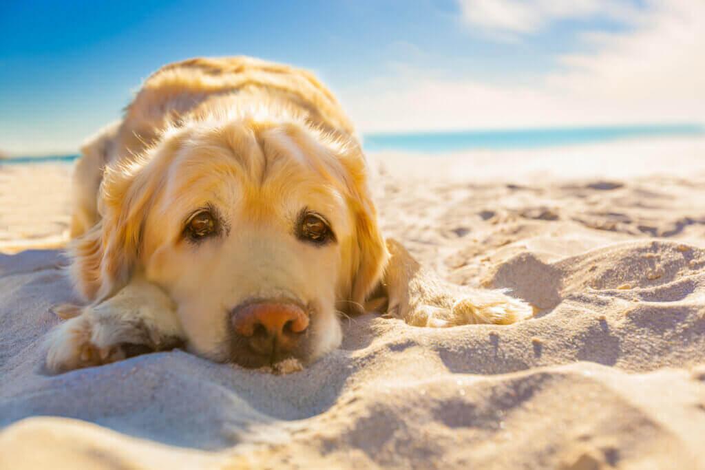 Soldermatit hos husdjur: Faran med för mycket sol