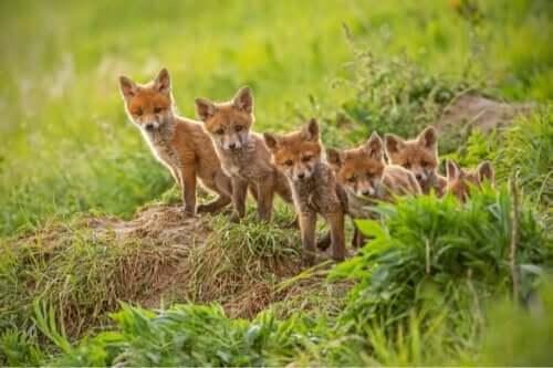 Varför äter vissa mödrar i djurriket sina avkommor?