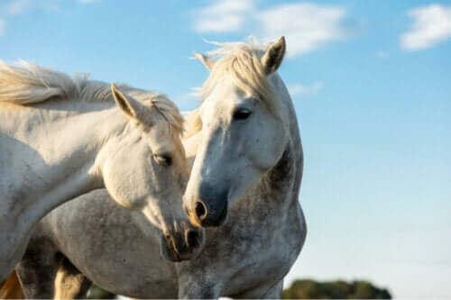 Två hästsjukdomar som är föremål för officiell kontroll