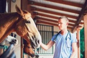 veterinär undersöker häst för två hästsjukdomar